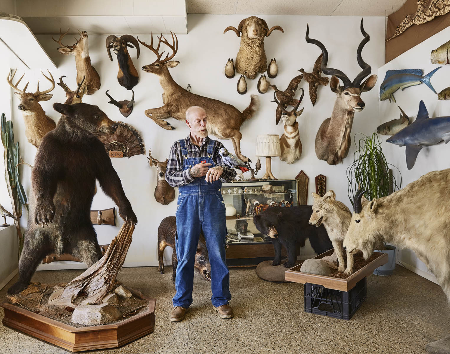 John The Taxidermist